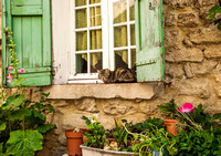House Cat on Window Sill